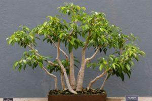 Le piante pi adatte per la camera da letto soggettopoliticonuovo blog - Piante per camera da letto ...