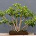 Le piante più adatte per la camera da letto